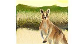 Kangaroo drawing by Muni