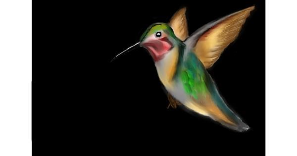 Hummingbird drawing by Jan