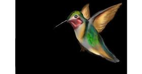 Hummingbird drawing by Jan