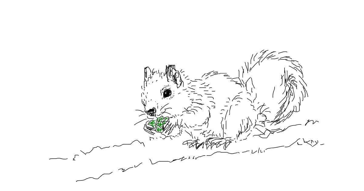 Squirrel drawing by wesley