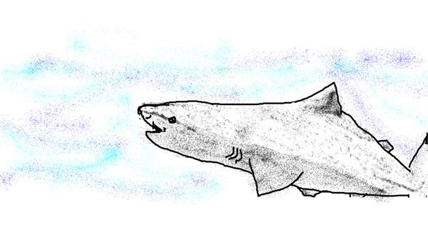 Shark drawing by Shaterstar