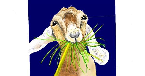 Goat drawing by GJP