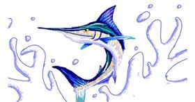 Swordfish drawing by Sam