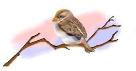 Sparrow drawing by Debidolittle