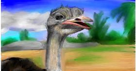 Drawing of Ostrich by Soaring Sunshine