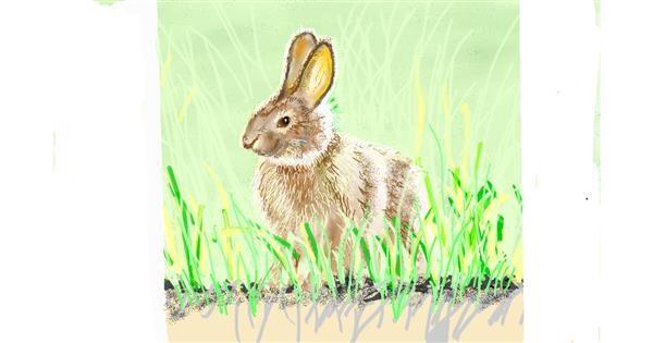 Rabbit drawing by GJP