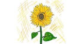 Sunflower drawing by Llama