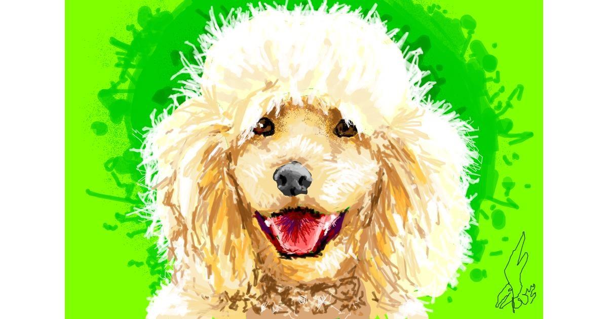 Poodle drawing by WindPhoenix