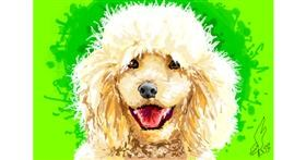 Drawing of Poodle by WindPhoenix