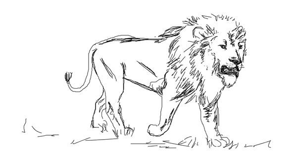 Lion drawing by Your Elbow