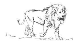 Drawing of Lion by Your Elbow