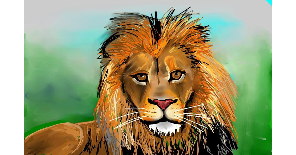 Lion drawing by Rose