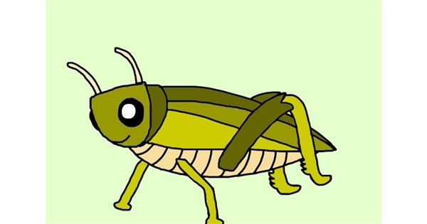 Grasshopper drawing by Lucy