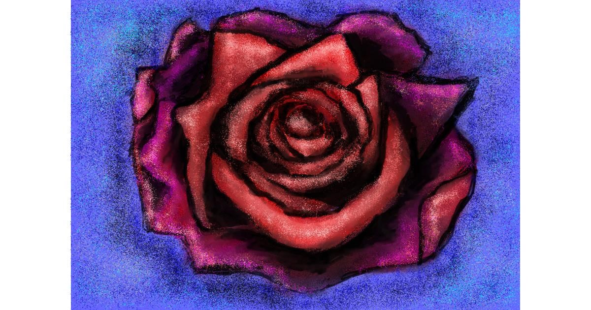 Rose drawing by Michelle