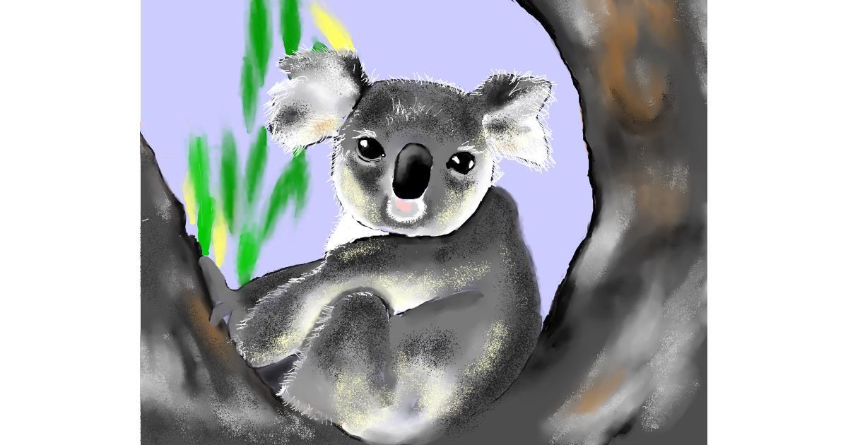 Drawing of Koala by Cec