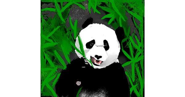 Panda drawing by Claria