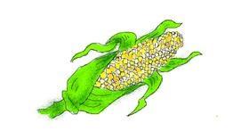 Drawing of Corn by Chloe
