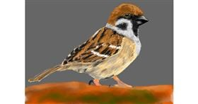 Sparrow drawing by Bicho