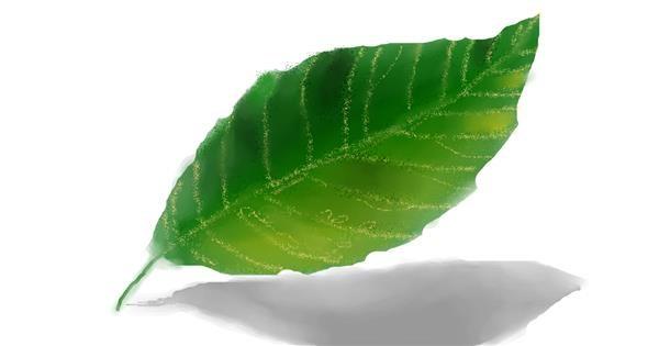 Leaf drawing by :0
