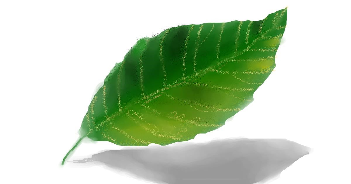 Drawing of Leaf by Nero