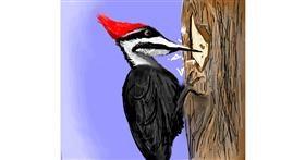 Woodpecker drawing by Emit
