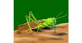 Grasshopper drawing by Cec