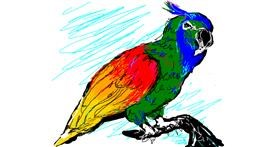 Parrot drawing by Paranoia