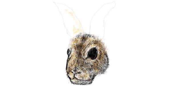 Rabbit drawing by Dettale