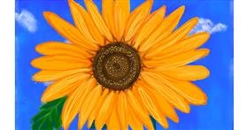 Drawing of Sunflower by Tim