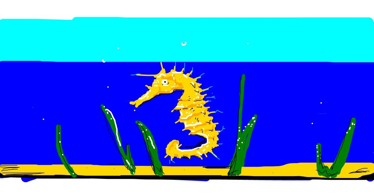 Seahorse drawing by han