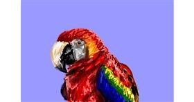 Parrot drawing by Soaring Sunshine