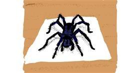 Spider drawing by Cherri