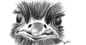 Drawing of Ostrich by Wizard