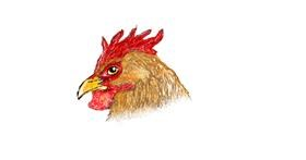 Rooster drawing by hahah