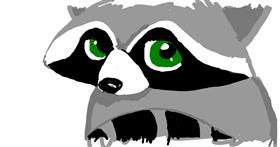 Raccoon drawing by Mercy