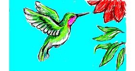 Hummingbird drawing by Sim