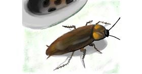 Cockroach drawing by Zi