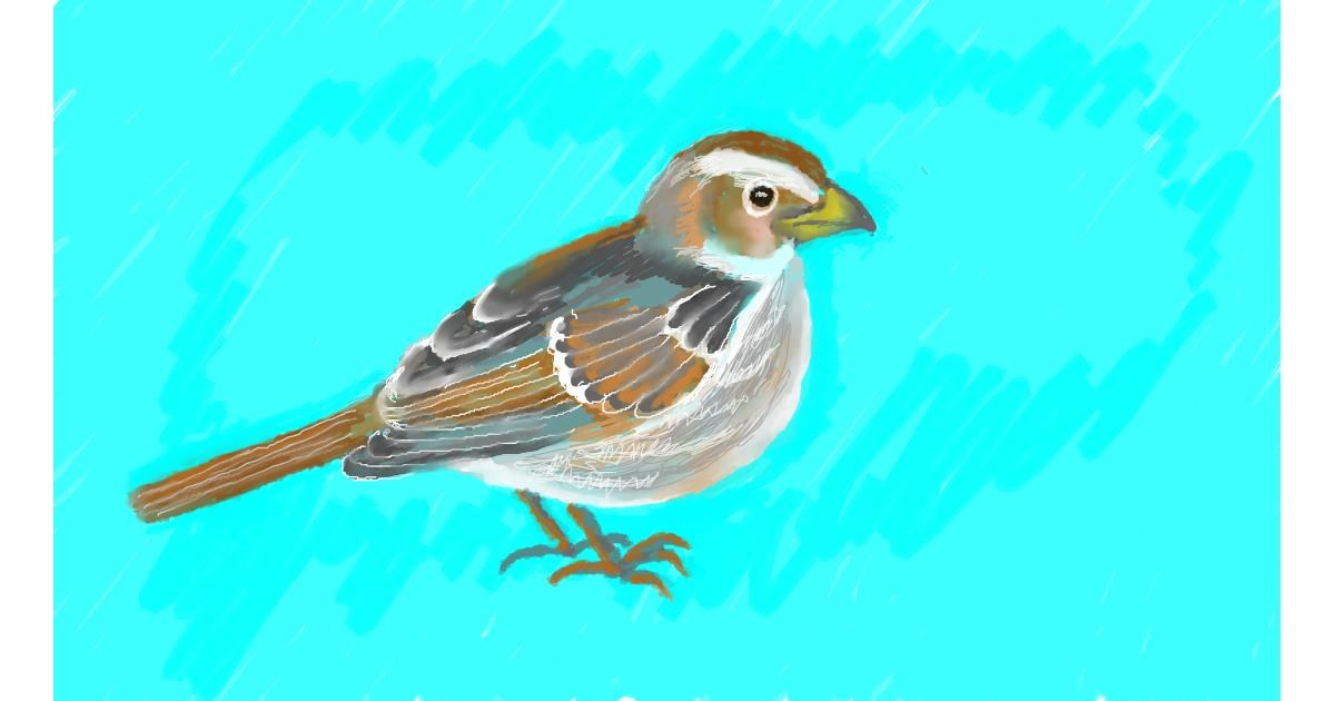 Sparrow drawing by SAM 🙄