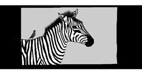 Zebra drawing by Pinky