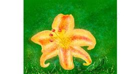 Lily flower drawing by Nonuvyrbiznis