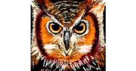 Owl drawing by Rose rocket