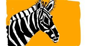 Zebra drawing by Anonymous