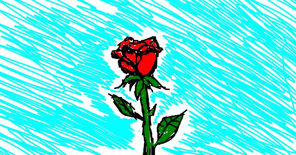 Rose drawing by