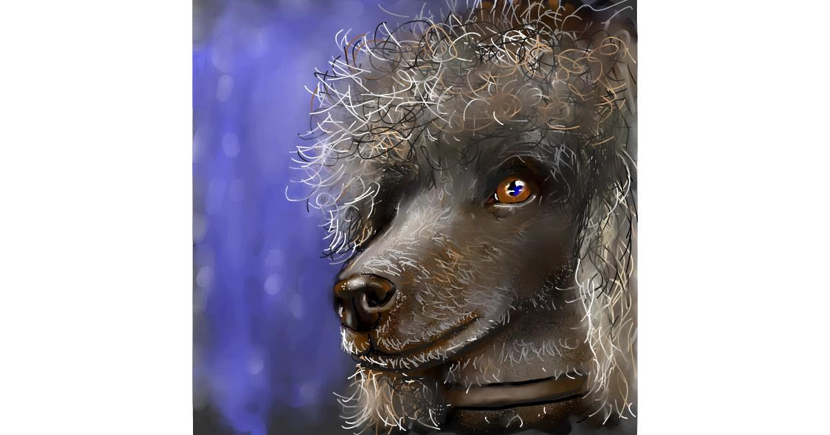 Poodle drawing by Leah
