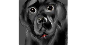Drawing of Dog by Yashi 🐢