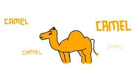 Camel drawing by bob
