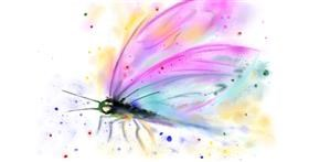 Drawing of Dragonfly by Wizard