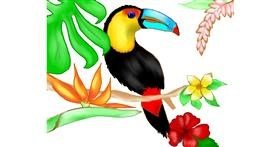 Drawing of Toucan by Cec