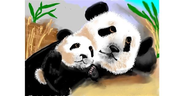 Panda drawing by sam