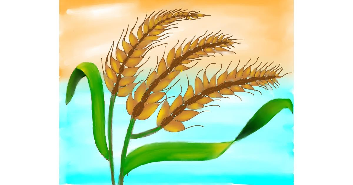 Wheat drawing by Freny